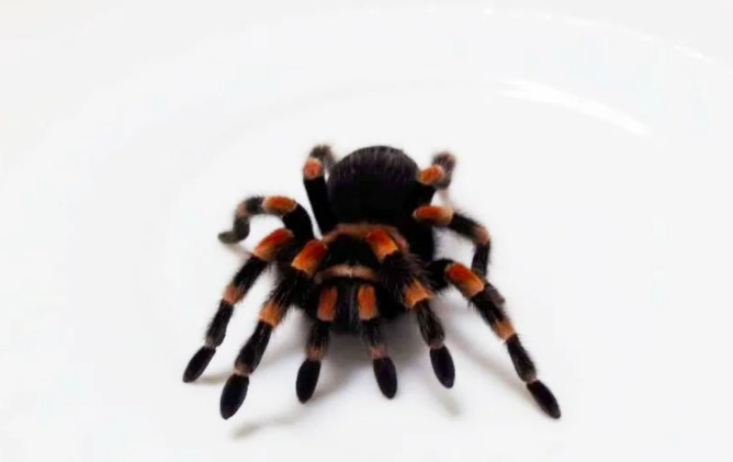 Массаж крупными пауками