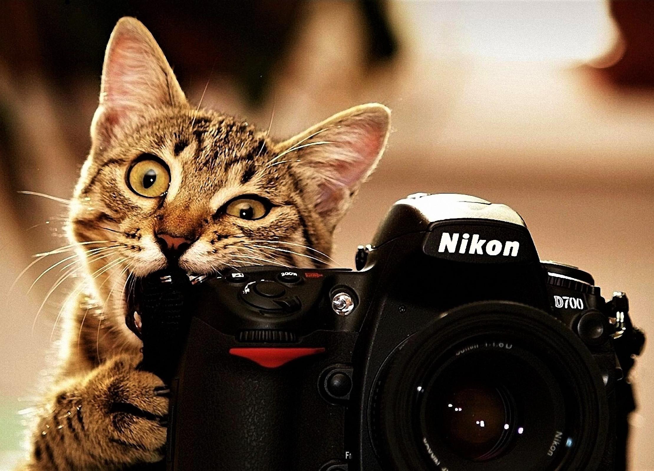Индивидуальный мастер-класс фотографии
