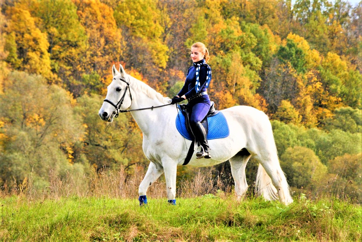 Прыжок на лошадях
